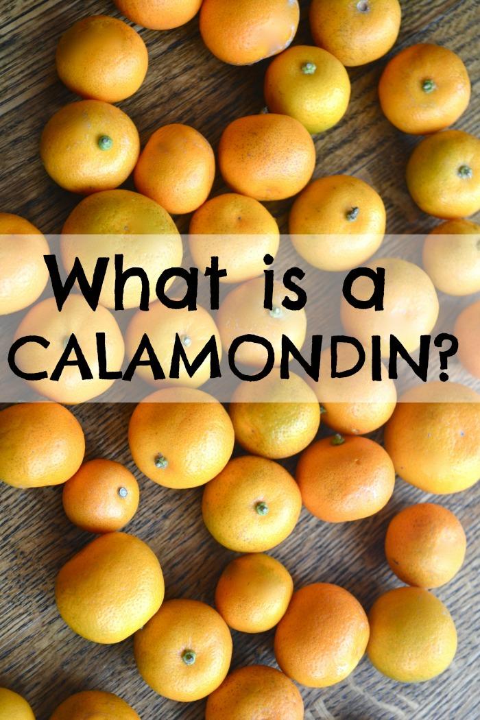 calamondin1